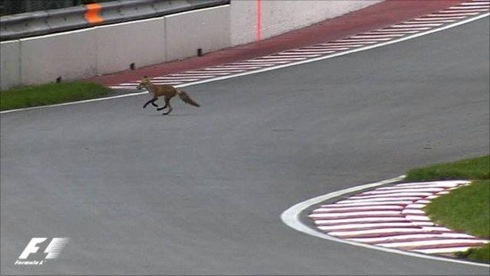 Fox on F1 track