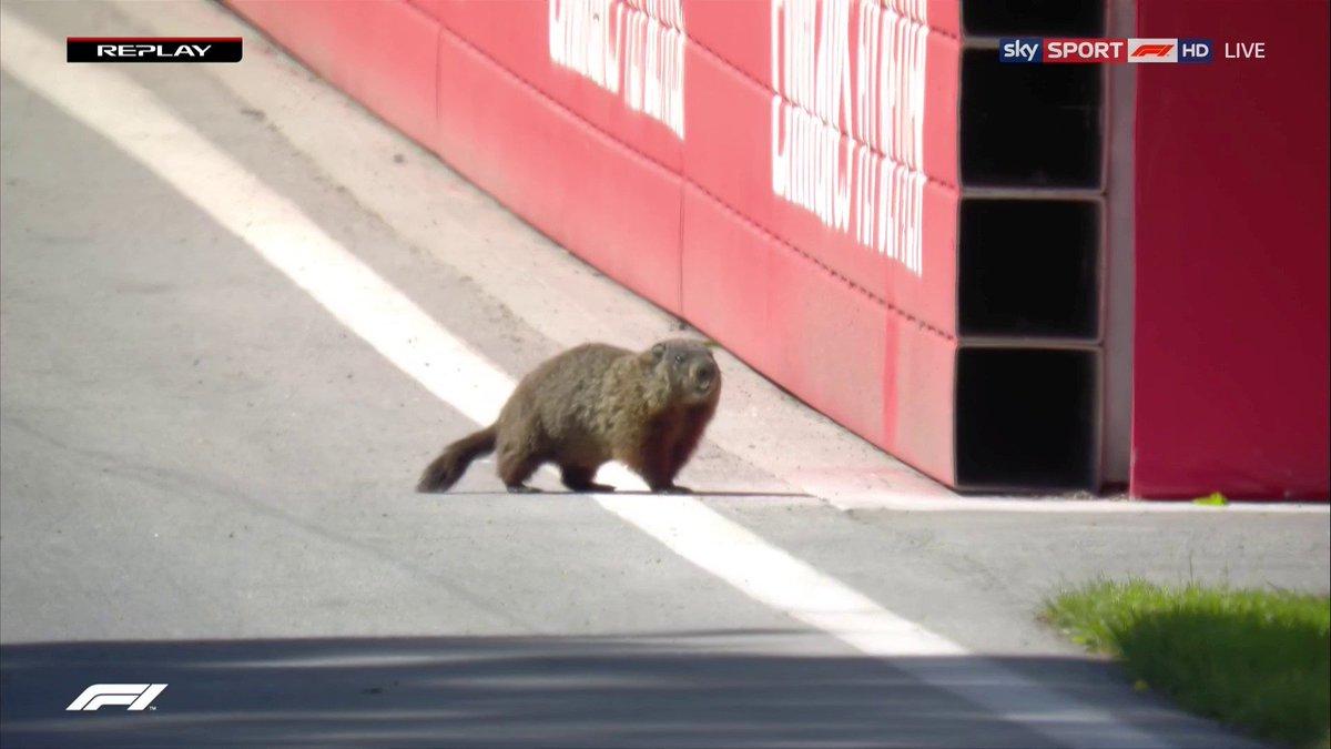 Groundhog on F1 track