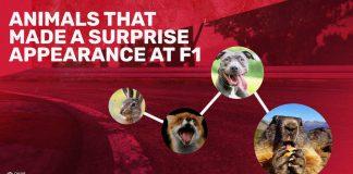 Animals F1